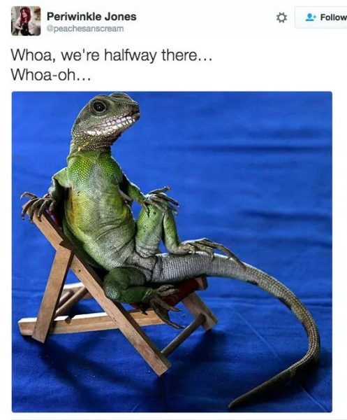 … lizard on a chair