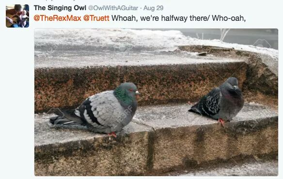 … pidgeons on the stairs